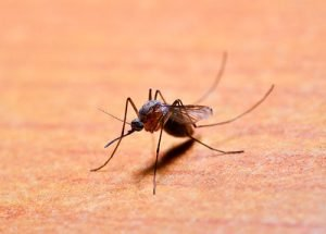Caledonia Mosquito Control