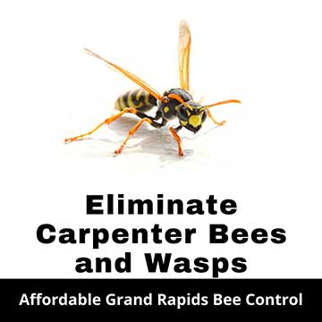 Grand Rapids Bee Removal
