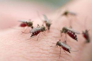 Cutlerville Mosquito Spraying