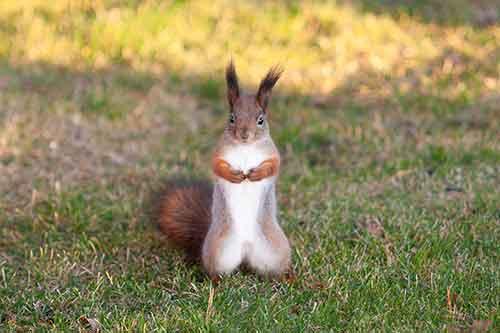 Grand Rapids Squirrel Removal