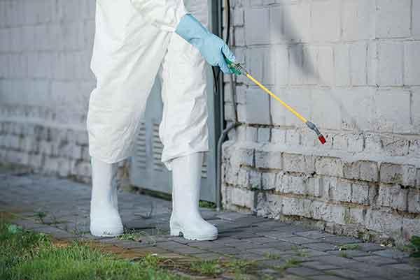 Pest Control Grand Rapids