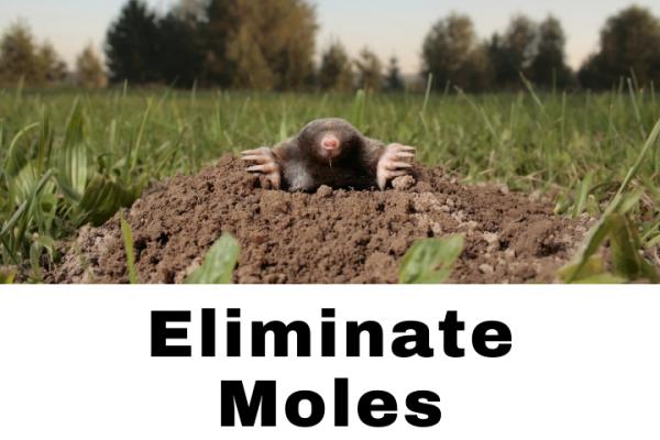 Mole Removal Grand Rapids